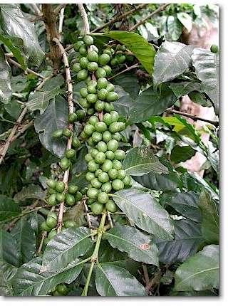 Кофе в зернах egoiste noir 100 арабика отзывы